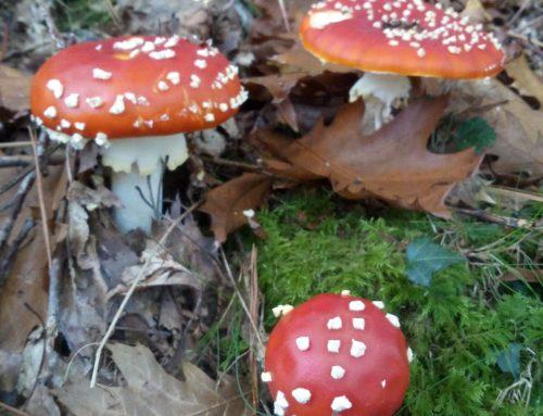Excursión micológica de otoño